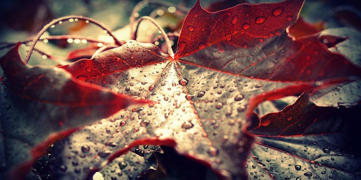 Leaf 300+ Muhteşem HD Twitter Kapak Fotoğrafları