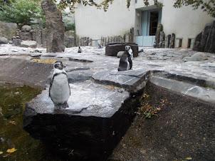 Penguin Enclosure in Prague zoo.