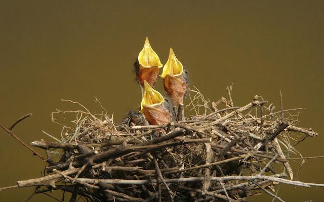 Best Jungle Life nestlings, nest