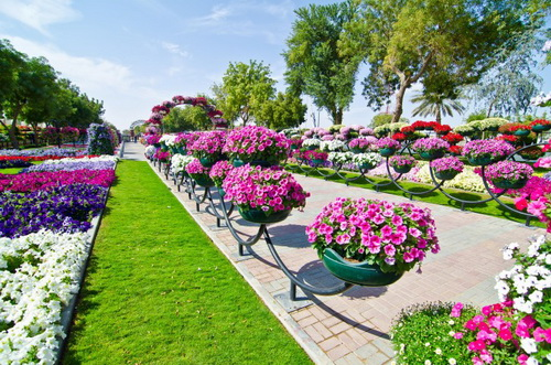 Dubai Miracle Garden: The Most Beautiful and Largest Flower Garden in World, Dubai Miracle Garden, amriholiday.blogspot.com, Beautiful Holiday Destinations, All about paradise, holiday, travel tips, and tourist resort, Dubailand, dubai