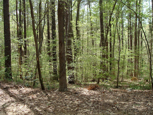 young growth on forest in springtime