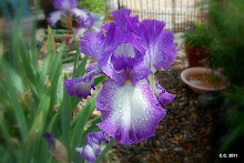 Jesse&#39;s Song Iris