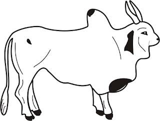 desenho de touro, desenho de boi, gado, figuras de touros e bois, bovinos