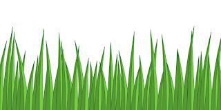 Pengeluar ialah tumbuhan hijau yang menghasilkan makanan sendiri melalui proses fotosintesis
