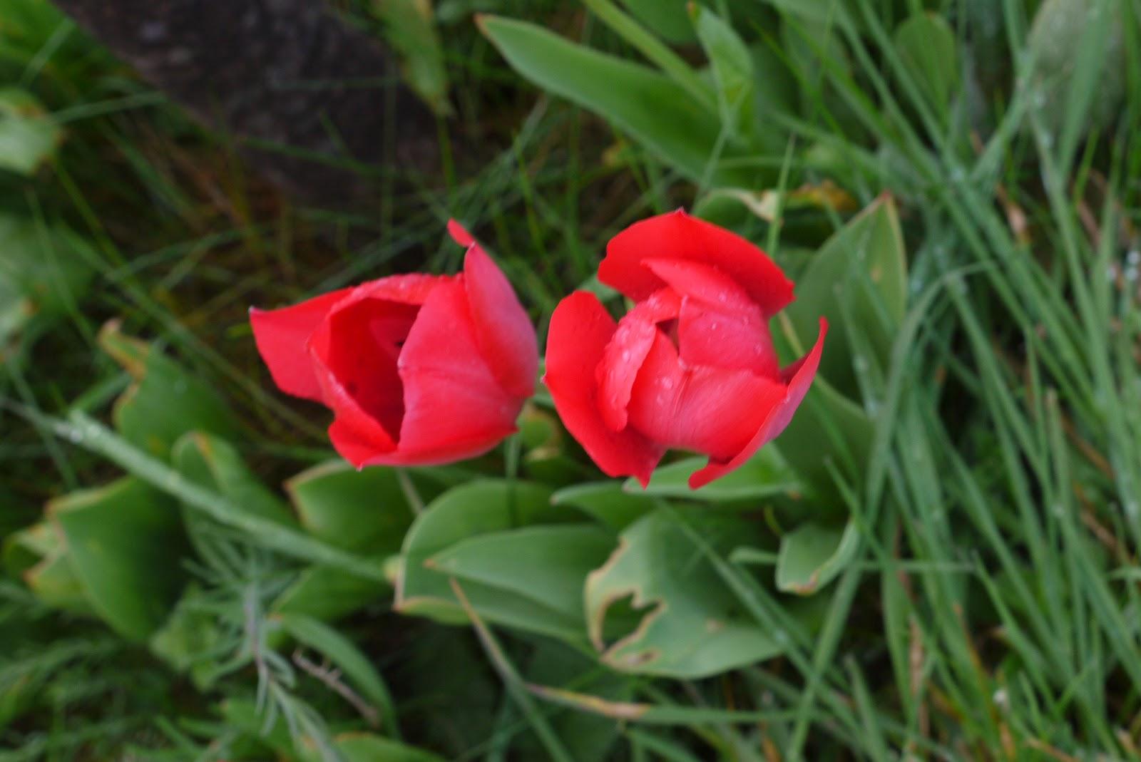 Je t 39 aime colette printemps pourri c 39 est encore bien for Quelle heure ikea ouvre t il aujourd hui