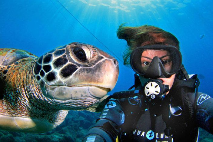 Curious turtle swims up to a photographer Monste Grillo