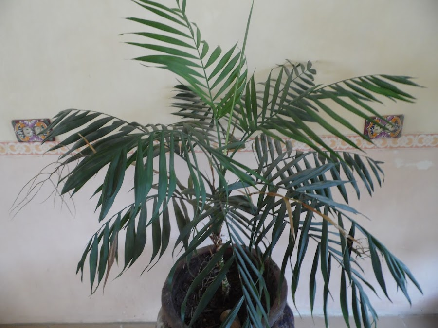 Plantas de interior que requieren poco cuidado