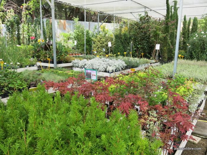 Ideas y composiciones de plantas para maceta en septiembre - Viveros plantas madrid ...