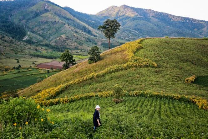 Gia Lai: Ngắm dã quỳ trên núi lửa Chư Đăng Ya