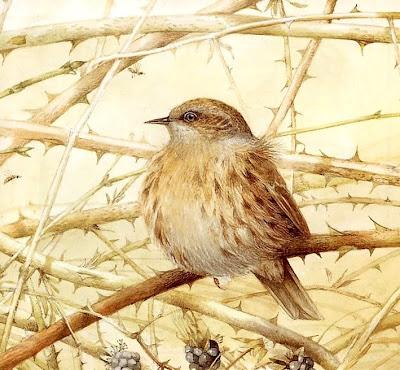 ilustración vintage pájaros