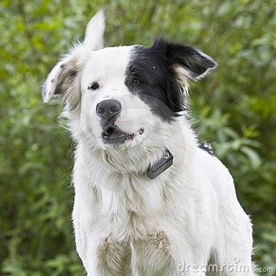 Dogs Info: Mutt (Dogs)