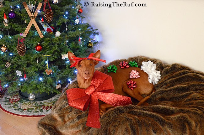 12 Days Of Christmas Dog RaisingTheRuf
