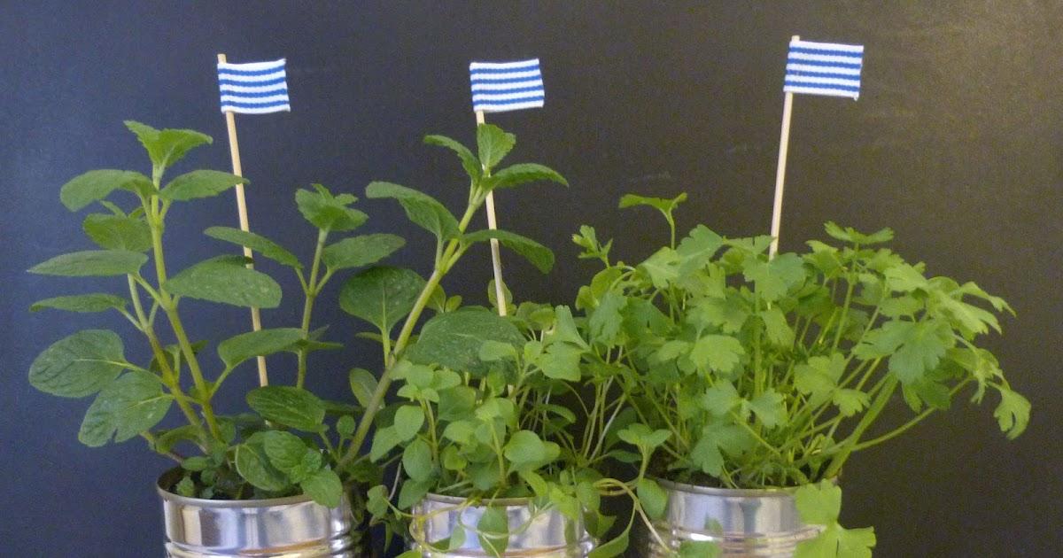 Beachcomber Mini Herb Garden