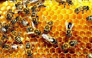 manfaat madu, manfaat madu bagi kesehatan, madu herbal, pasutri