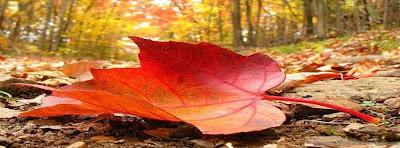 image de couverture pour facebook feuille d'automne