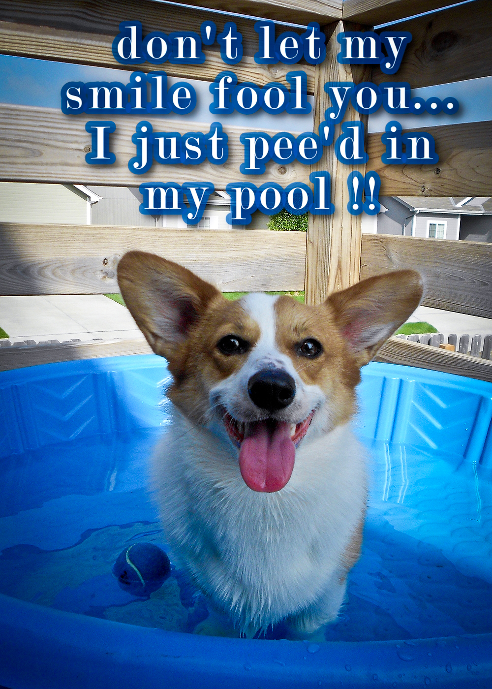 Friday Feature Everybody In The Pool The Daily Corgi
