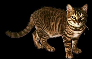Cat Breed Churp
