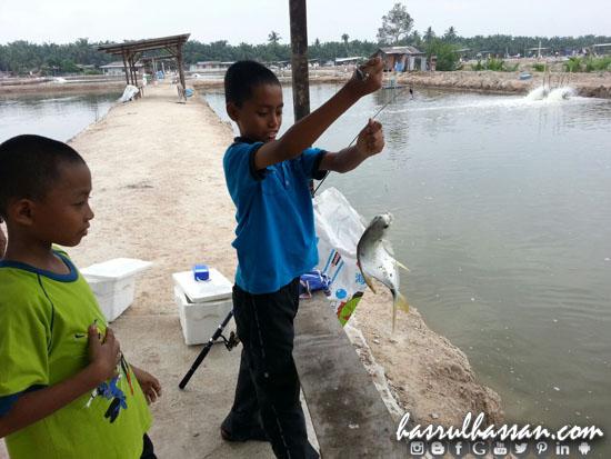 Memancing Bawal Emas Kolam 3 Ringgit di Jugra