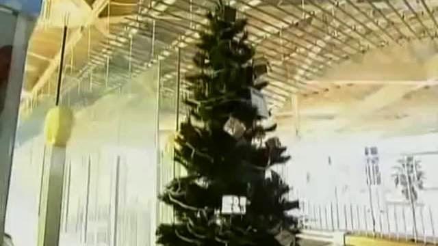 Un sapin de Noel éclairé avec le courant généré par une anguille électrique