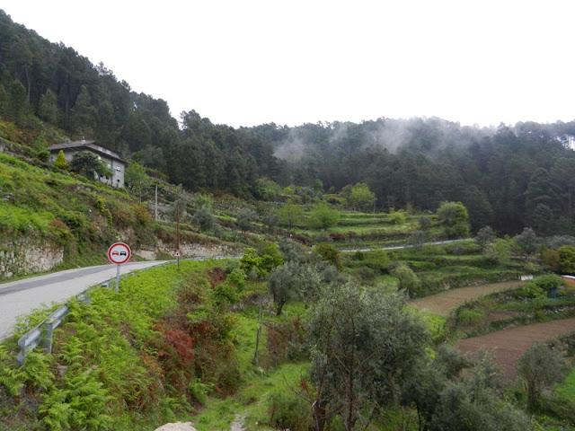 Виноград для портвейна Португалия