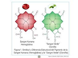 Hemoglobina y Clorofila