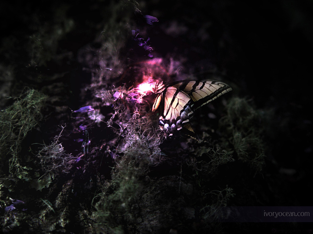 3D <b>Butterfly Wallpaper Desktop</b> | Animal <b>Wallpapers</b> | Neon ...