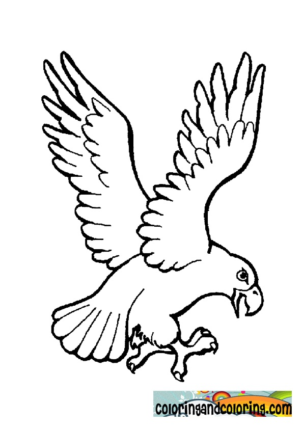 Eagle Coloring Pictures http://www.coloringandcoloring.com/2012/04/eagle-coloring-pages.html