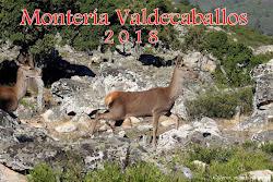 MONTERÍA VALDECABALLOS 2018