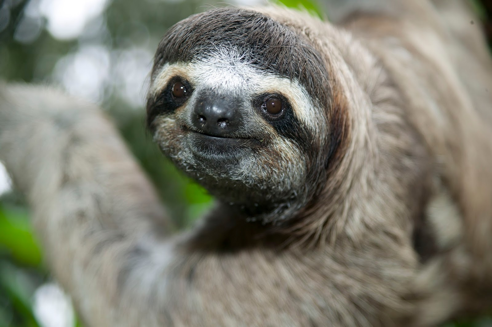 the sloth paying attention to detail Keep your vid footage consistent with quick and fun tips from ashley, a detail-oriented pro subscribe to our youtube channel.
