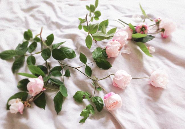 Wild Roses blog fashion blogger aimerose rasa virviciute