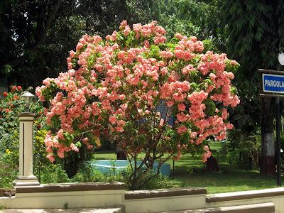 Pargola Garden, Daman