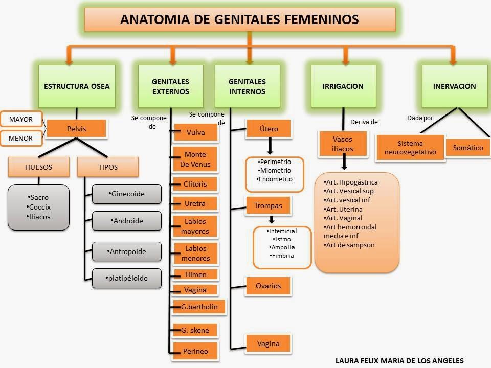 Blog de Ginecologia y Obstetricia: anatomía de genitales femenino