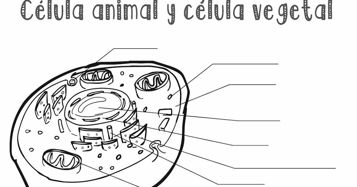 Clula animal y clula vegetal