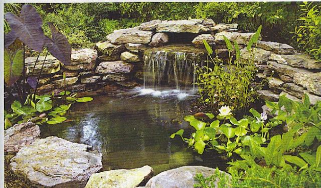 Garden and landscaping designs for Water garden design