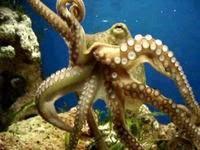 По сей день в морских глубинах живут гигантские спруты