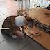 Sedih ....Kucing Meraung Tangan Di Potong Manusia Durjana