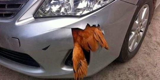 Ayam dihantam 112 km/h, justru mobilnya yang bolong