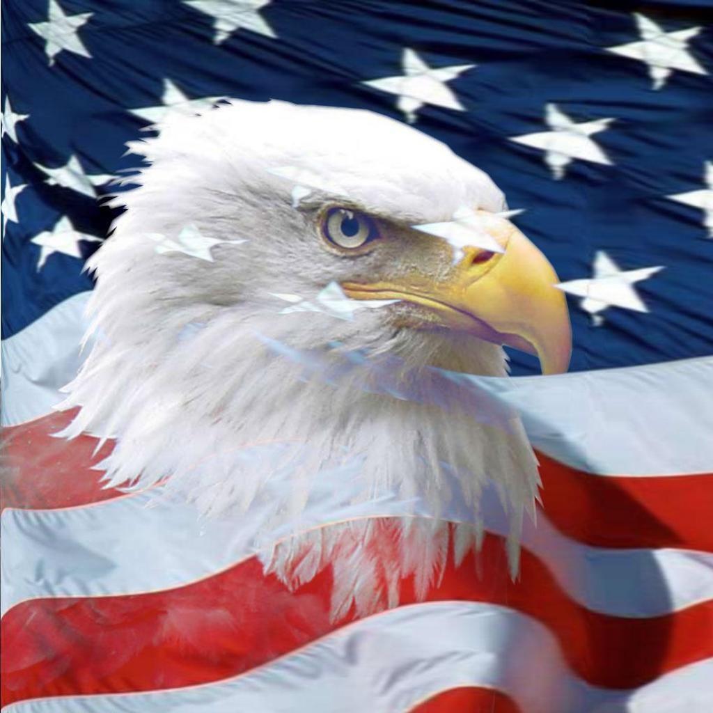 http://2.bp.blogspot.com/-Hc5GOlGatrE/Tb7H35ajo_I/AAAAAAAAAEQ/tLs7PM2rf0k/s1600/american_bald_eagle_ipad_wallpaper-1024x1024.jpg