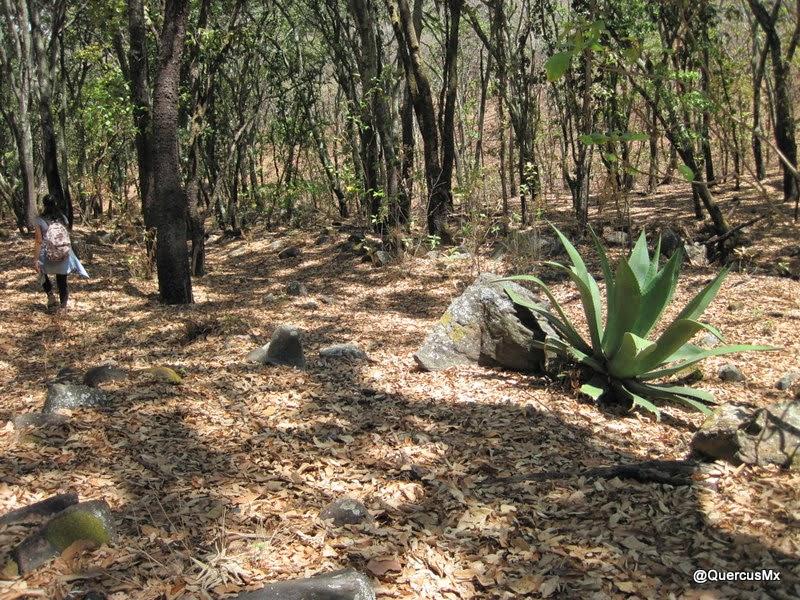 Explanadas en la Barranca del Tecuán