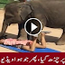 An Elephant Crushed a girl in ground