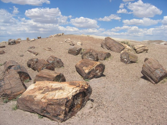 Imagine that you walk Petrified_Forest_National_Park_Wood-580x435
