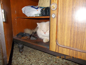Tomcat Matata sneaking into a open cupboard.