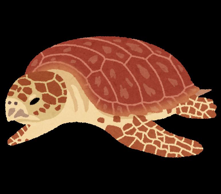 アカウミガメの画像 p1_29