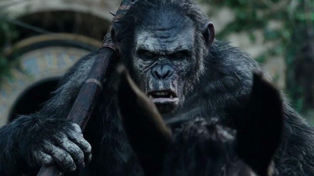 film planète des singes l'affrontement