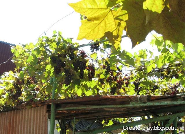 виноград Абхазия