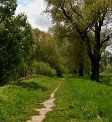 Cestu nachádzame tak, že po nej kráčame.  (Franz Kafka)