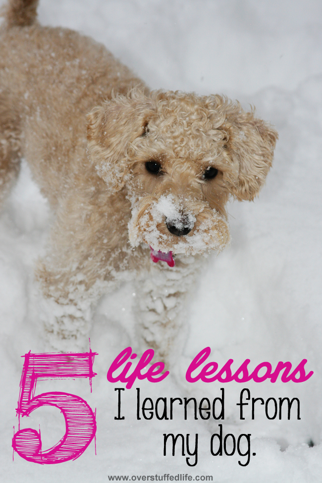 Five important life lessons that my dog understands better than I do. #overstuffedlife