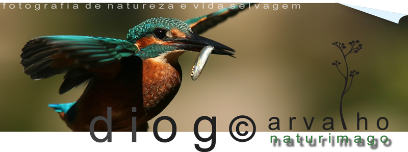 Diogo Carvalho - naturimago