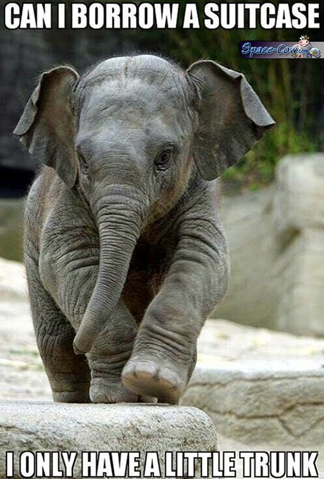 funny animals elephant picture