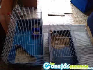 Jaulas conejos enanos